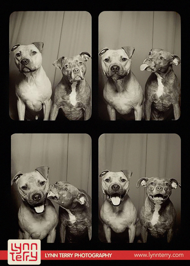 dogs photo booth 1 A Woman Put Dogs In A Photo Booth. What Happened Next Is The Cutest Thing Ever!