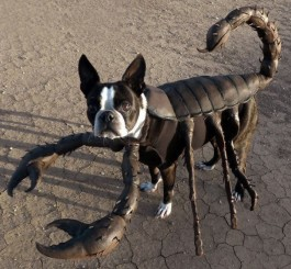 image58 265x245 10 Scariest Halloween Costumes For Your Pets..#10 will haunt you in your dreams!