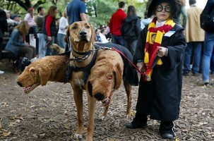 image62 303x200 10 Scariest Halloween Costumes For Your Pets..#10 will haunt you in your dreams!