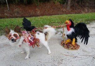 image63 303x213 10 Scariest Halloween Costumes For Your Pets..#10 will haunt you in your dreams!