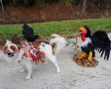 Horrifying Halloween Pet Costumes