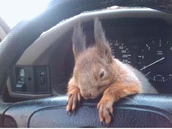 14155469734797 officer squirrel4 A Dying Squirrel Gets Help From a Kind Warrant Officer