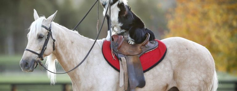 Are dogs smarter than horses