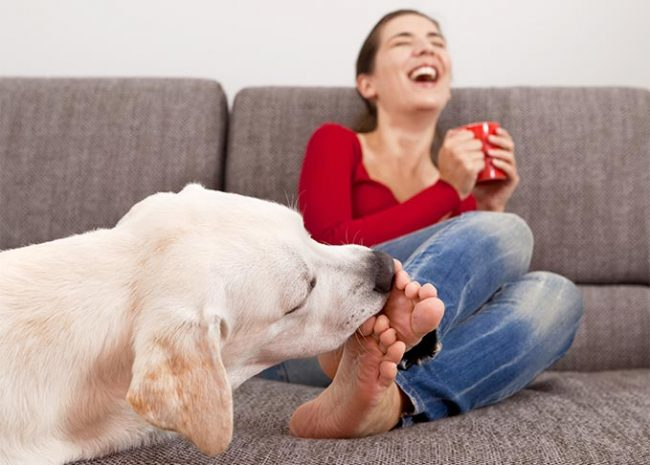 Why does my dog lick my legs 650x465 Why does my dog lick my legs?