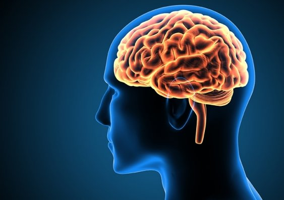 Does brain size correlate to intelligence Does brain size correlate to intelligence?