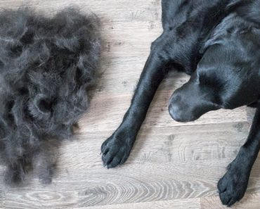What's the difference between hair and fur